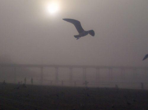 Ocean beach fog 2