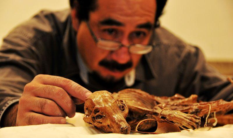 Mexico mummified dog 3