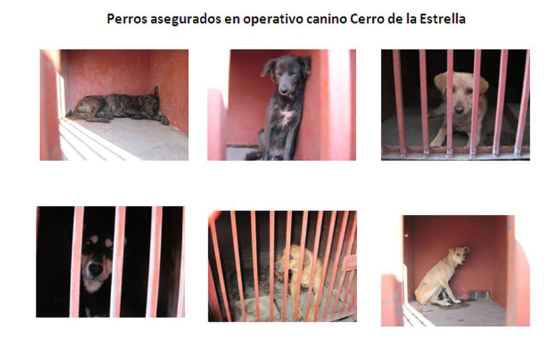 Dogs iztapalapa cerro de estrella hand-out pound